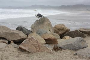 Gulls and ground squirrels